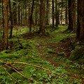 2008 04 08 De la mousse au milieu du bois