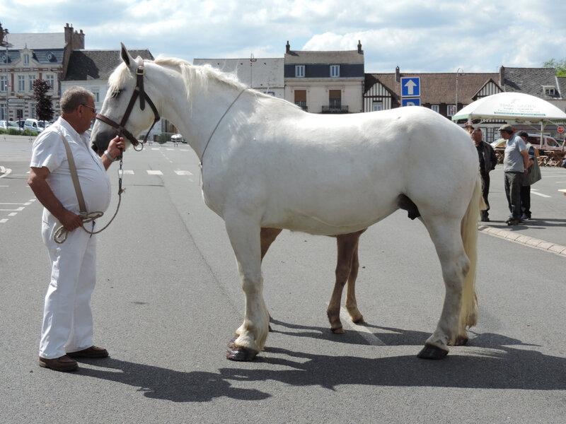 Castille de Mai - 2 Juin 2019 - Concours d'élevage local - Fruges (62) - 5e (Poulinières Suitées)