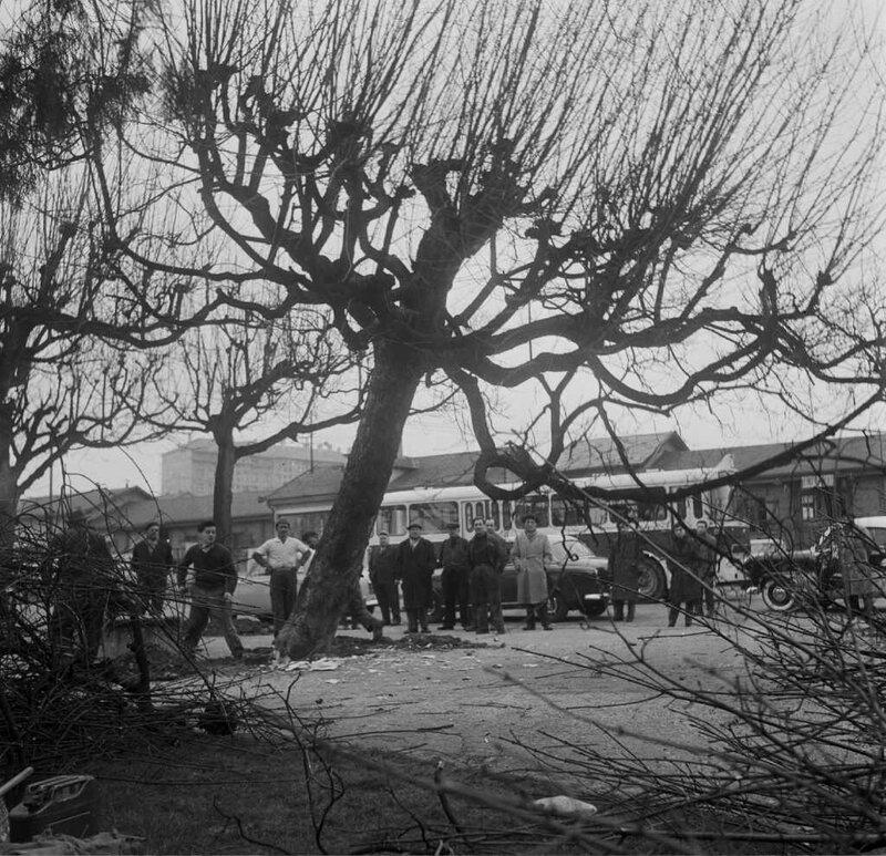 gare viotte abattage des arbres ars 60