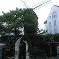 Paris s'éveille ! rando nicole margot - par lucile carbenay (8 août 06)