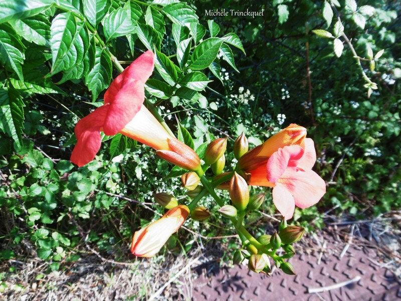 1-Lever de soleil et Fleurs de Léon 040719