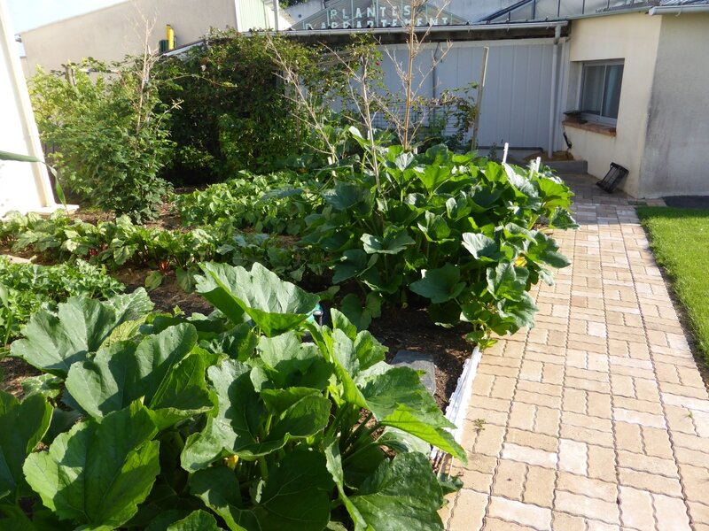 4-courgettes (2)