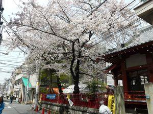 Canalblog_Tokyo03_06_Avril_2010_015