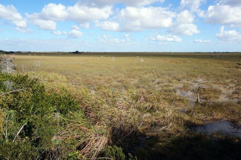 Everglades (41)