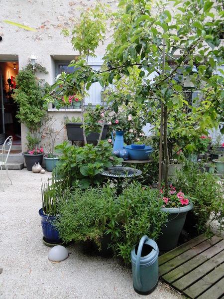 cour_bucolique_et_verdoyante_plantes_et_fleurs_campagne