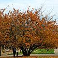 Racines et branches