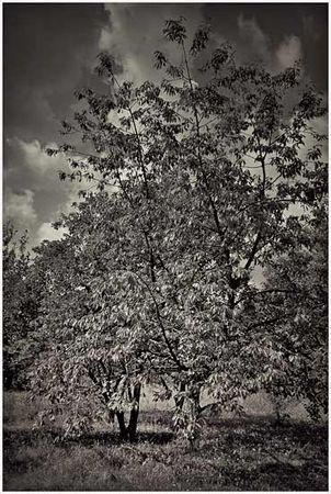 Et aussi les arbres