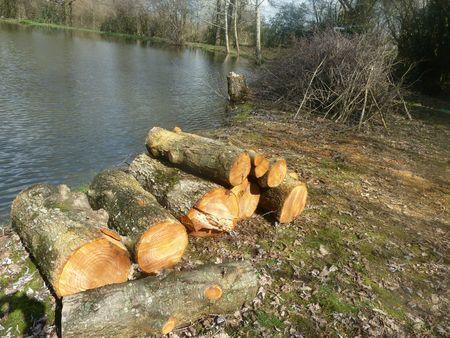 14mars-abattage arbres (2)